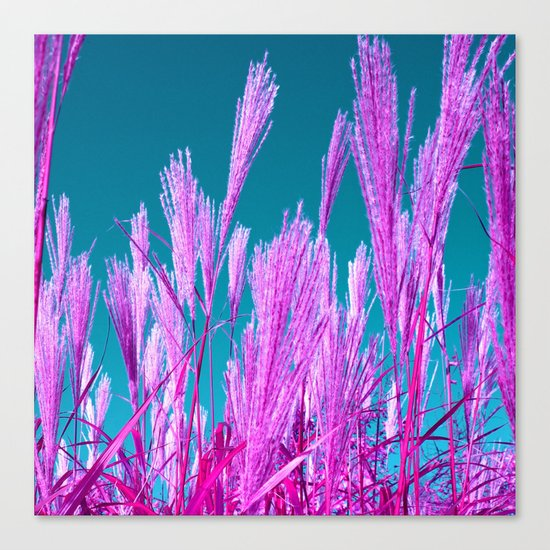 purple grasses I Canvas Print