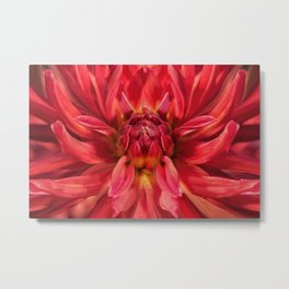 Dahlia red flower Metal Print
