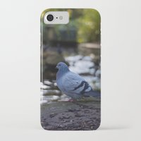 pigeon iPhone & iPod Cases featuring Pigeon by Elliott Kemp Photography