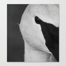 Trumpeter Swan | Wildlife Photography | Birds | Nature | Black and White | Portrait Canvas Print