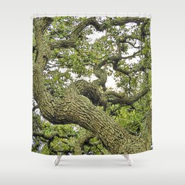 Live Oak of Coastal Texas Shower Curtain