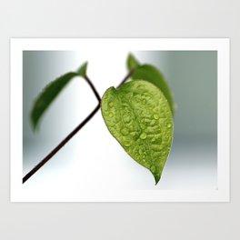 Raindrop Leaves Art Print