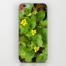 Yellow Violets iPhone Skin