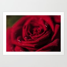 Fire-Red-Rose - Roses Flowers Art Print