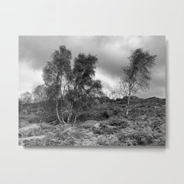 Windswept birch trees Metal Print