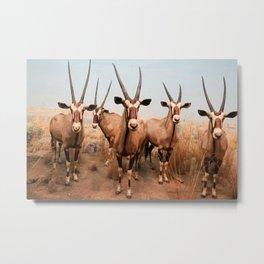 the herd at maasai mara-kenya Metal Print