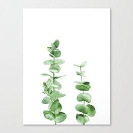 Eucalyptus leaves. Canvas Print
