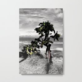 The Catus Tree Siesta Key Beach Metal Print