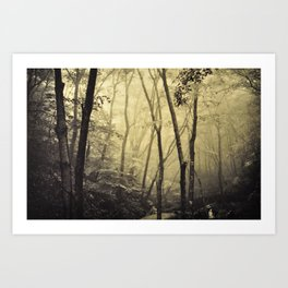 Mysterious forest. Art Print