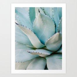 Blue | Aloë Vera Succulent photography print | Soft colored Art Print