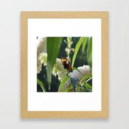 Small Tortoiseshell Butterfly Framed Art Print