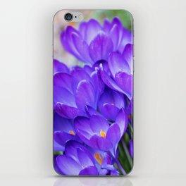 Violet Crocuses iPhone Skin