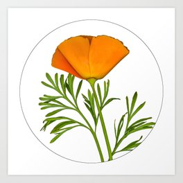Photo of a Golden Poppy in a Circle Art Print