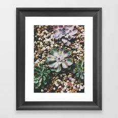 Succulent Framed Art Print