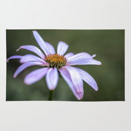 Summer Echinacea flower Rug