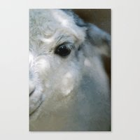 lama Canvas Prints featuring Lama by Design Windmill