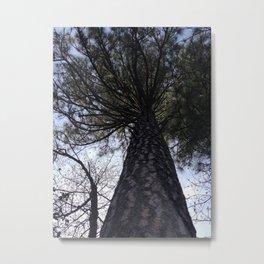 Trees in Yosemite - California Countryside Metal Print