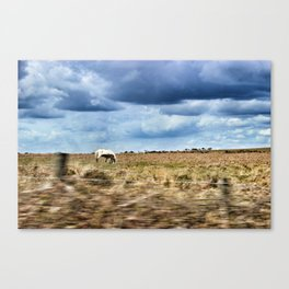 Mare and Foal: Gower Canvas Print