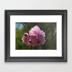 Japanese Spring - Prunus serrulata 638 Framed Art Print