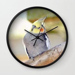 Cockatiel Dreams Wall Clock