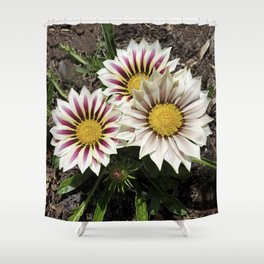 Zany Gazania - red and white stripes Shower Curtain