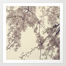 Raintree Lavender pink tree blossoms Art Print