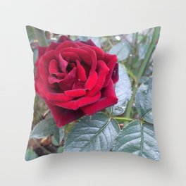 Red Rose Throw Pillow