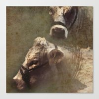 cows Canvas Prints featuring Cows by John Beswick