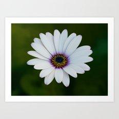 Blue Eyed Daisy Art Print