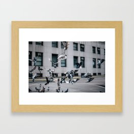 Flying Rats Framed Art Print