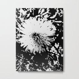 White Farfara Metal Print