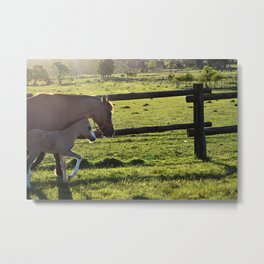 Mom and baby horse Metal Print