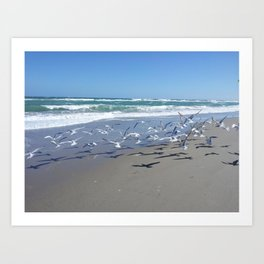 Seagulls Galore  Art Print
