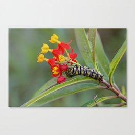 Monarch & Milkweed Canvas Print