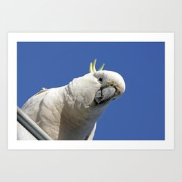 Cockatoo sees you while your sleeping Art Print
