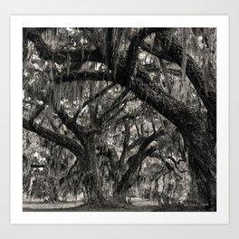 Live Oaks with Spanish Moss, Georgia Art Print