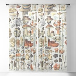 Adolphe Millot - Champignons A - French vintage poster Sheer Curtain