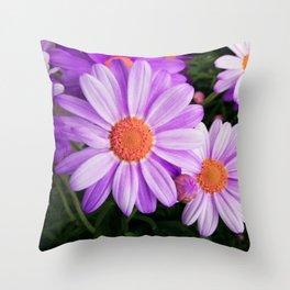 Purple Daisies Throw Pillow