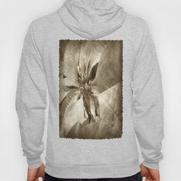 Pale Yellow Poinsettia 1 Antiqued Hoody