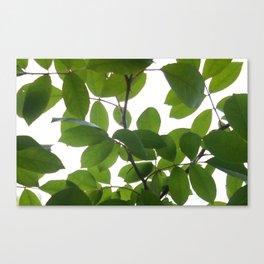 Tree and light Canvas Print