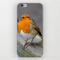 Cheeky Robin  iPhone & iPod Skin