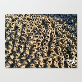 Barnacle City Canvas Print