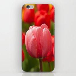colourful tulips II iPhone Skin