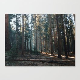 Woods of California Canvas Print