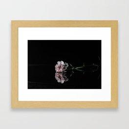 Carnation Flower Framed Art Print