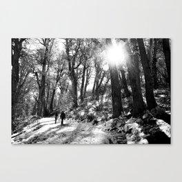 Transitando el bosque Canvas Print