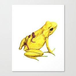 yellow frog Canvas Print