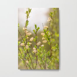 Spring willow branches Metal Print