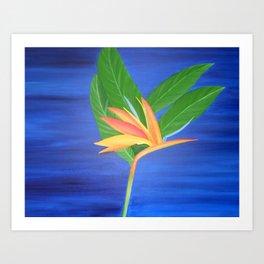 Bird of Paradise - Blue Background  Art Print
