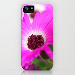 Livingston Daisy by Mandy Ramsey iPhone Case